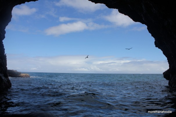 birds flying by cave napali coast kauai hawaii