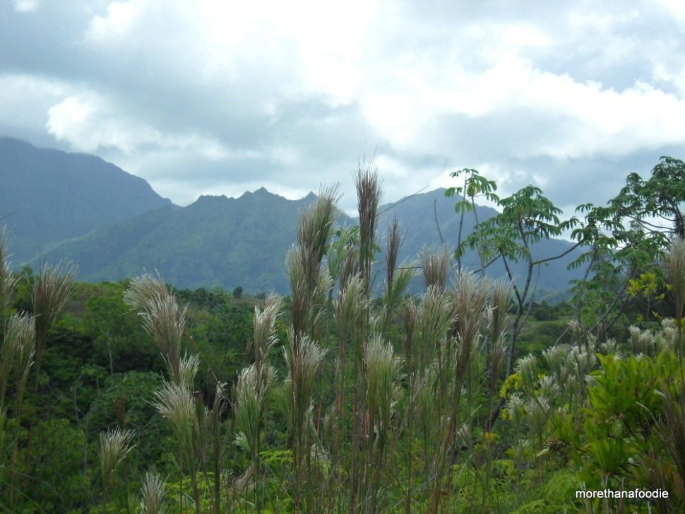kauai mountain views hawaii garden island movies