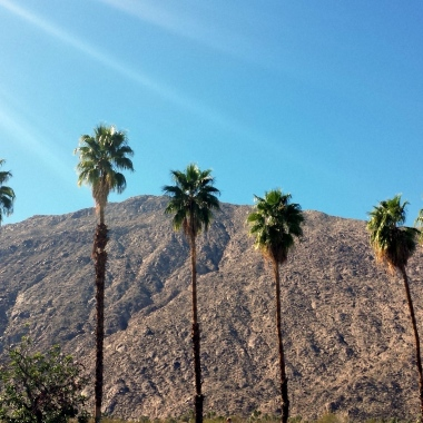 palm trees and mountain palm springs california