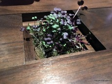 Micro Greens Grown for Us. Ha. Inserted into the table.